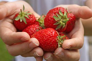 Seasonal Fruit And Vegetable Guides Usa Sensory