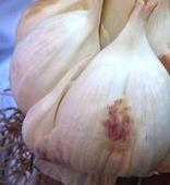 garlic from Siciliy, Italy