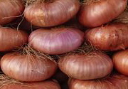 onions in Sicily, Italy